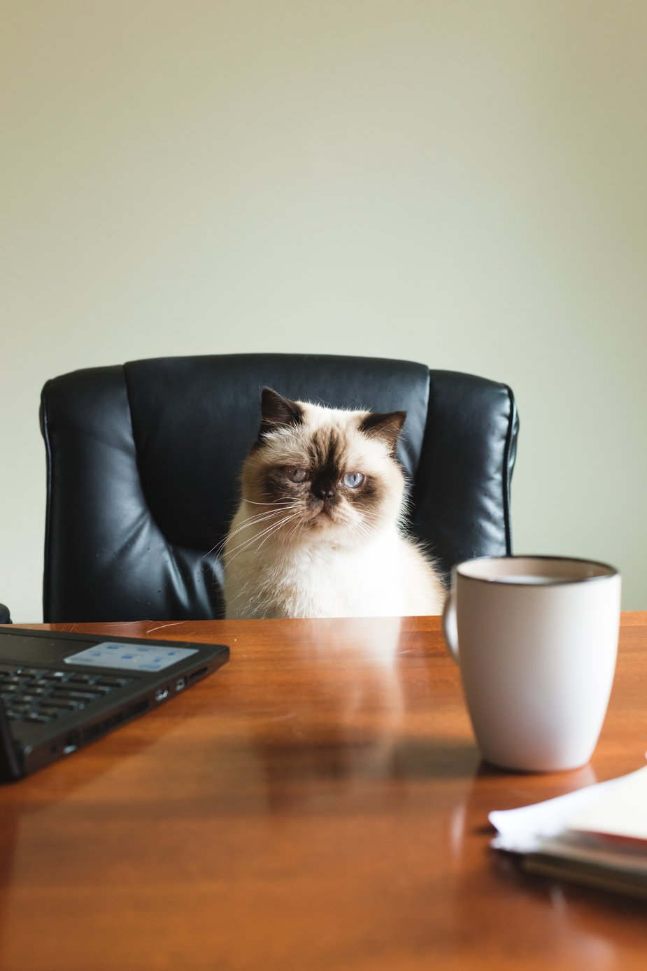 A small white cat sitting at a desk